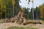 Městské lesy Hradec Králové