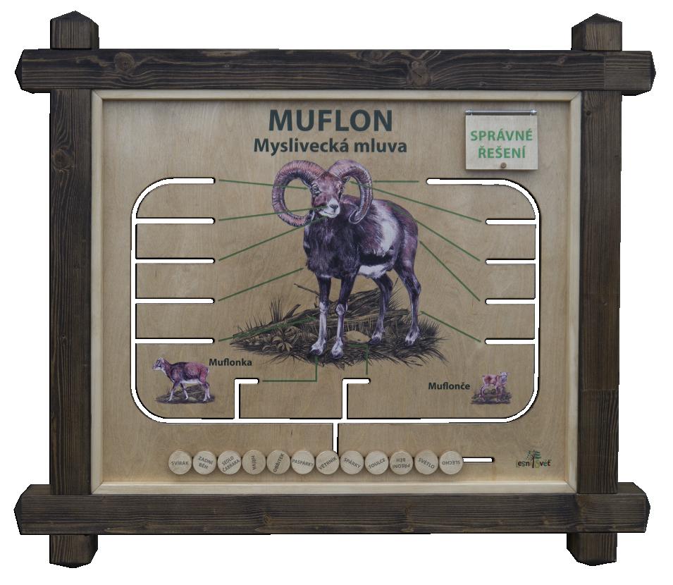 Myslivecká mluva - Muflon