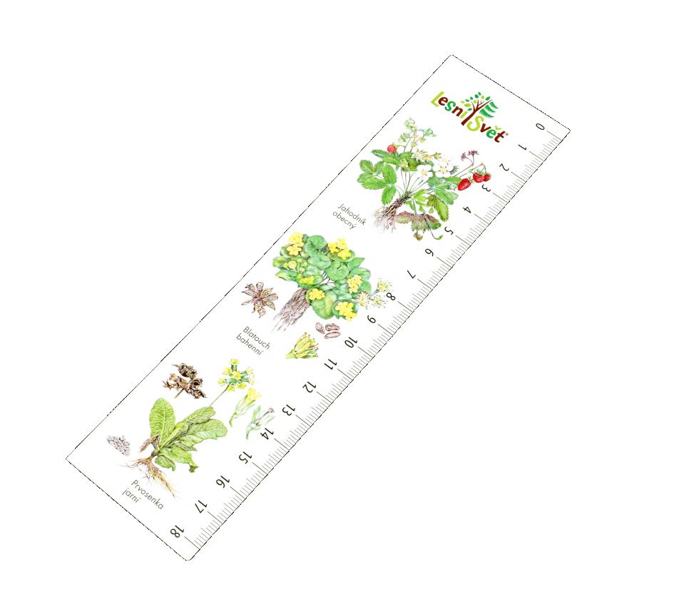 Papírová záložka s měřítkem - Byliny