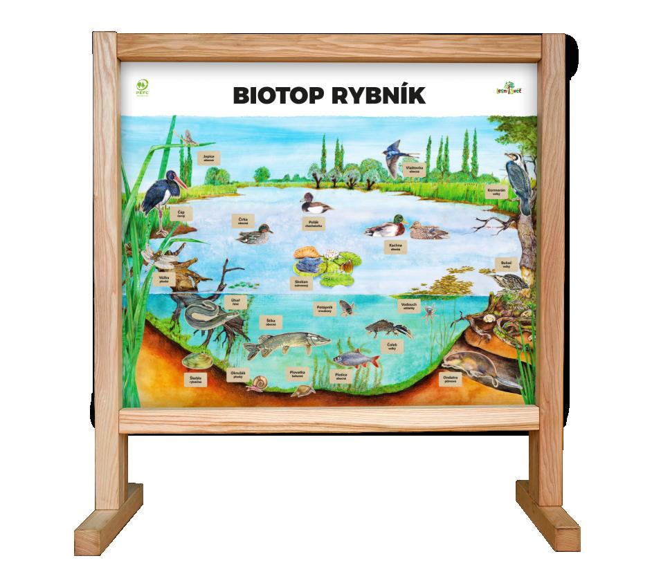 Stolní biotop s magnety - Rybník