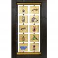 Mravenci a mraveniště (M)